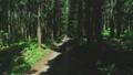 숲 57254139