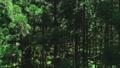숲 57254140