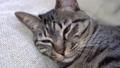 眠たい猫 57354025