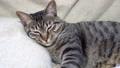 あくびをする猫 57354055