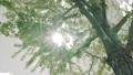 日本の景色 自然 木 4K対応 57778306