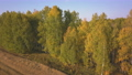 Flying above a beautiful birch grove in autumn. Yellow birch in the ravine. Aerial view 58013876