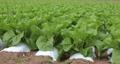 白菜畑 パン 58171935