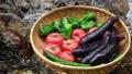川で冷やす夏野菜  58301846