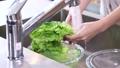 野菜を洗う手元 58301880