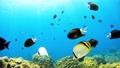 Underwater photography of Okinawa Akajima 58353473