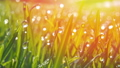 Grass with morning dew drops. Closeup shot with soft focus. Abstract background 58375670