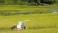 お米を収穫する男性 稲刈り コンバイン 田んぼ 秋 お米 58451235
