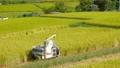 お米を収穫する男性 稲刈り コンバイン 田んぼ 秋 お米 58451243