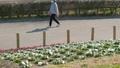 花畑と通行人 歩行者 公園 散歩 ウォーキング 58451616