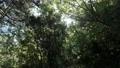 森の中の木漏れ日 きらきら きらめく 58451761