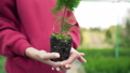 The biologist is holding a plant with pressed soil. Ecosystem, root of coniferous seedling. Wide 58716809