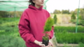 Botany. Young woman scientist holding a green thuja seedling in her hands. Love for nature and the 58716811