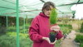 Woman florist checks a beautiful green seedling in a greenhouse outdoors. Control and research of 58716812