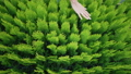 Many plants in green pots - a female hand touches and strokes seedlings. Top view, static shot 58716827