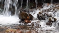 Close-up of a waterfall in a autumn forest 58741183