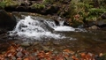 Close-up of a waterfall in a autumn forest 58741196