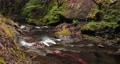 長野県辰野町 国天然記念物 横川渓谷 蛇石 音有 58994740
