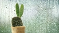 cactus in front of rain drops falling on a window  59065561