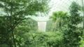 シンガポール・チャンギ空港にある緑いっぱいの屋内 59293686