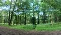 エストニアの緑いっぱいの森の様子 59507633