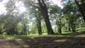 エストニアの緑いっぱいの森の様子 59545294