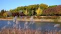 Autumn scenery in seoul olympic park 59655179