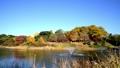Autumn scenery in seoul olympic park 59655180