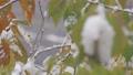 降雪イメージ 59702584