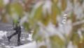 降雪イメージ 59702613