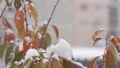 降雪イメージ 59702617