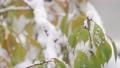 降雪イメージ 59702619