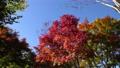 白鳥庭園の紅葉 フィクス撮影 59802703