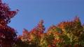 白鳥庭園の紅葉 フィクス撮影 59802704