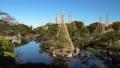 白鳥庭園の雪吊り松とユリカモメ フィクス撮影 59802739