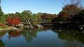 白鳥庭園の紅葉とユリカモメ フィクス撮影 59802740