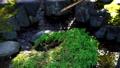 白鳥庭園のつくばい フィクス撮影 59802743