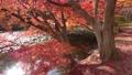 モミジ・秋の蛇の鼻遊楽園(福島県・本宮市) 59827459