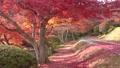 モミジ・秋の蛇の鼻遊楽園(福島県・本宮市) 59827460