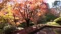 モミジ・秋の霞ヶ城公園(福島県・二本松市) 59847098