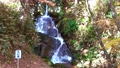 モミジ・秋の霞ヶ城公園(福島県・二本松市) 59847099