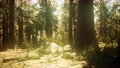 hyperlapse in sequoia forest from sunrise 59961668