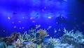 水族館 水槽 珊瑚 熱帯魚 サメ 60016680