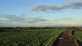 Field (autumn) 60071925