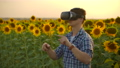 The biologist is working in VR glasses at sunset 60075726