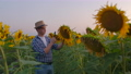 Young man on the sunflowers field in summer evening 60075731