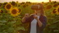 The female scientist is working in VR glasses at sunset between big sunflowers 60075733