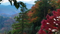 Mt. Takao autumn leaves 60169249