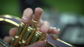 Close-up of the fingers of a musician who plays the trumpet 60202859
