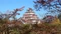 秋の鶴ヶ城(福島県・会津若松市) 60394444